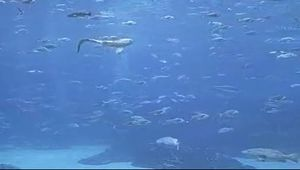 Georgia Aquarium Cam (USA)