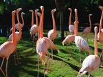 Flamingo Cam (USA)