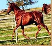 Horse TV (Russia)
