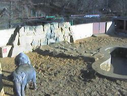 Elephants Cam (Czech republic)
