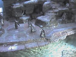 Pinguin Cam (Czech republic)